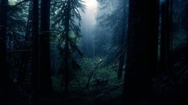 Стартовали съемки мистического триллера «Мёртвые ласточки»